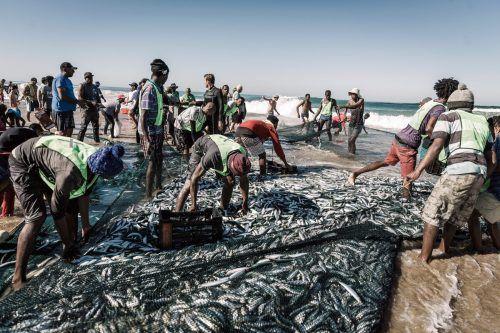 Millionen Sardinen ziehen an der Küste des Indischen Ozeans entlang. AFP