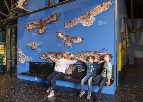 Nun können Kinder und Erwachsene die inatura-Ausstellungen wieder ungehindert erforschen. lcf