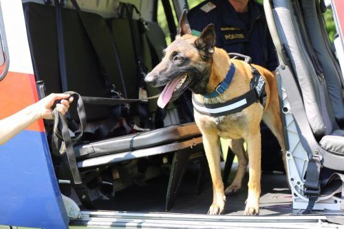 Die Polizeihündin Safira machte sich mit ihrem richtigen Riecher schon des Öfteren einen Namen. POLIZEI