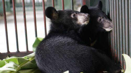 Ein Schmuggler wollte die erst wenige Monate alten Tiere verkaufen. APA/Vier Pfoten