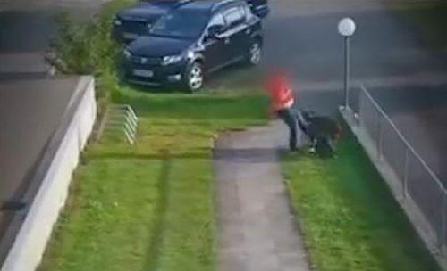 Ein Video zeigt, wie eine Frau einen ihrer beiden Hunde mehrfach tritt. VOL.at