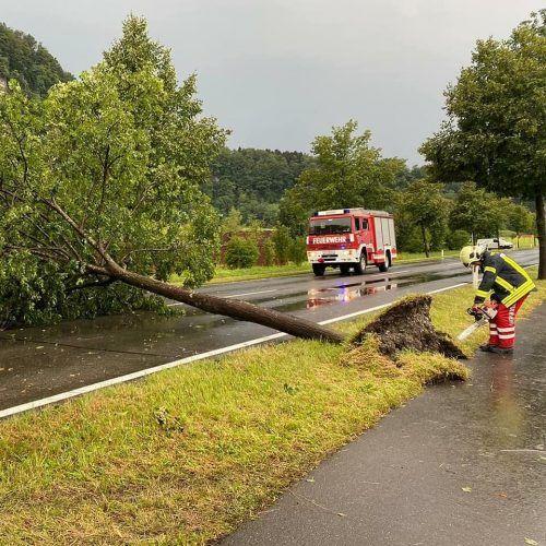 In Götzis musste die Feuerwehr einen umgestürzten Baum von der Straße entfernen.Feuerwehr Götzis
