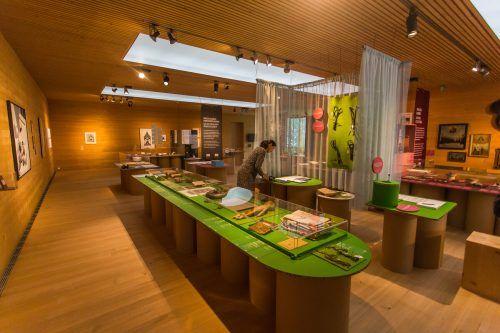 Die Ausstellung zur Geburtskultur läuft im Frauenmuseum noch bis Ende Oktober. Danach widmet sich das Team dem Thema Scheinehen. VN/Steurer, Natter