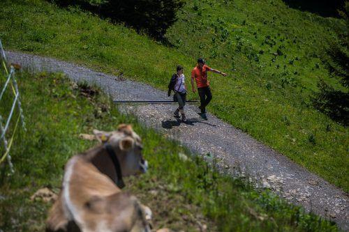 Wandertourismus ging auch im Bregenzerwald zurück.VN/Steurer