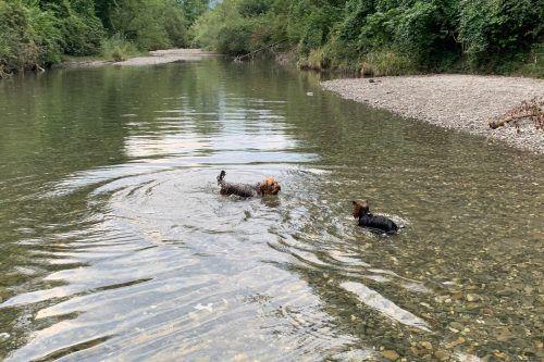 An zwei Stellen haben Hunde in der Dornbirner Ache Vorrang.Stadt
