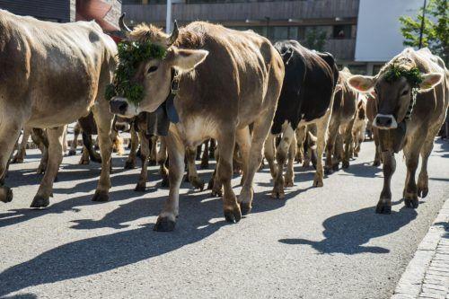 Auch der Alptag in Mellau fällt in diesem Jahr den Coronamaßnahmen zum Opfer.