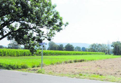 Auf diesem Grundstück neben dem Maisacker möchte Harald Köhlmeier ganzjährig Bio-gemüse anbauen. AJK