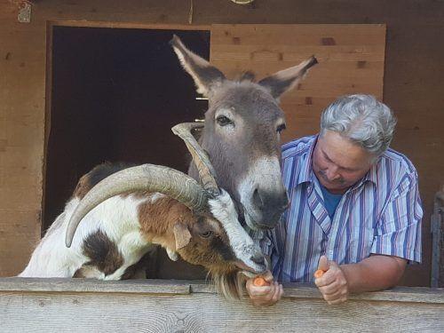 """Rudi Längle möchte nicht aufgeben. """"Es gibt keinen Plan B"""", sagt der Hofbetreiber, der rund 100 Tieren ein Zuhause gibt. Gut Bozenau, vol.at"""