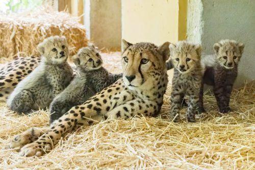 Bei Mama Afra fühlen sich die Kleinen immer noch am besten aufgehoben.apa