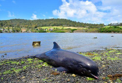 Die Tiere wiesen zum Teil Verletzungen auf. Reuters