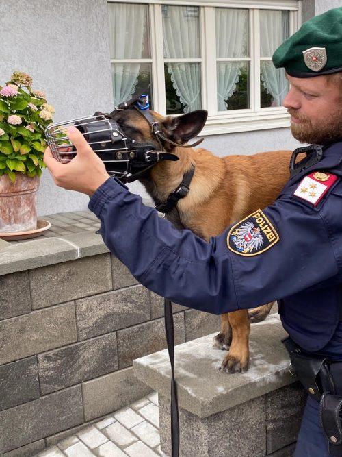 """Diensthundeführer Philipp Auer wird mit seinem """"Sigi"""" nun eine mehrmonatige Ausbildung durchlaufen. polizei"""