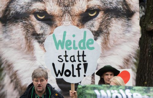 In Deutschland demonstrieren Bauern bereits gegen Wölfe.dpa