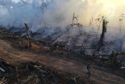 Schätzungen zufolge nahm die Entwaldung unter Bolsonaro um 85 Prozent zu. AP