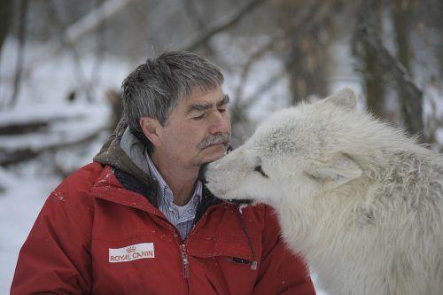 Verhaltensbiologe Kurt Kotrschal hat mit den Wölfen im Wolfsforschungszentrum Ernstbrunn einen vertrauten Kontakt. WSC Ernstbrunn