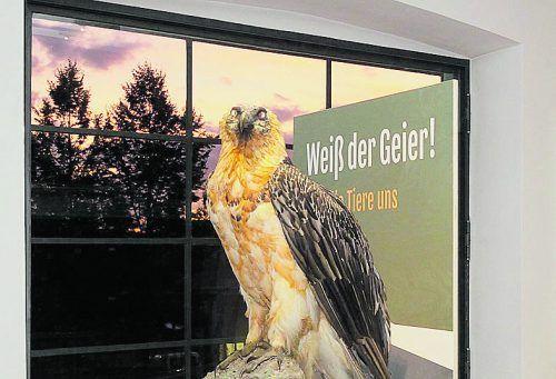 VN-Abonnenten besuchen die inatura in Dornbirn zum Vorteilspreis. inatura