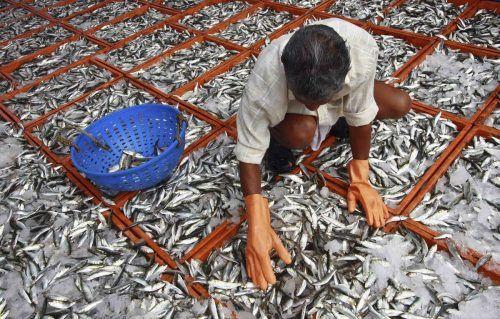 Auch Sardinen werden mit der zunehmenden Erderwärmung immer seltener.