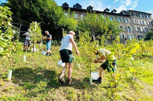 Auf dem eigens erworbenen Grund zwischen Meißnerstiege und Amtstorstraße wurden nun Weintrauben geerntet.fst