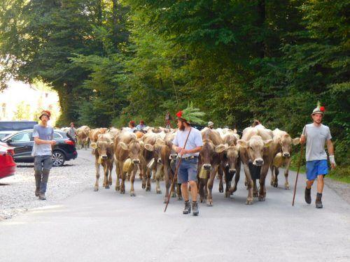 Auf die Älpler wartete diesmal kein großes Fest bei der Ankunft im Tal.mima
