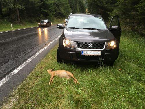 Besonders in der Dämmerung und der Dunkelheit ist die Gefahr groß, auf der Fahrbahn einem Wildtier zu begegnen. ÖAMTC
