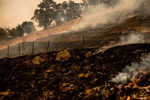 """Die Feuerwehr in Kalifornien kämpft weiter gegen die Waldbrände an. Das """"Glass Fire"""" in Napa Valley breitete sich zuletzt deutlich aus. AFP"""