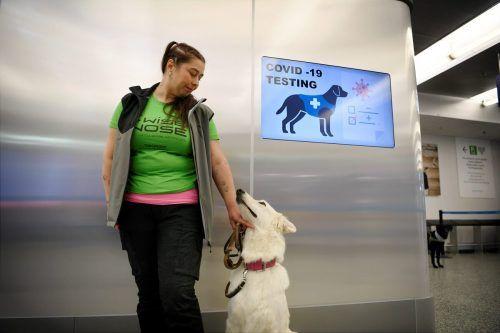 Die Hunde sollen am Flughafen von Helsinki das Coronavirus erschnüffeln. AFP