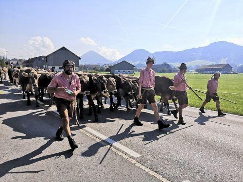 Eine große Herde zog beim Alpabtrieb von der Alpe Rubach durch die Vorderwälder Dörfer. ME/4