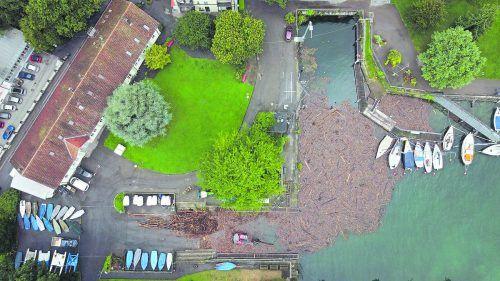 Mehrere Hundert Tonnen Treibholz bedrohen im Lindauer Hafen die Boote. B. LISS