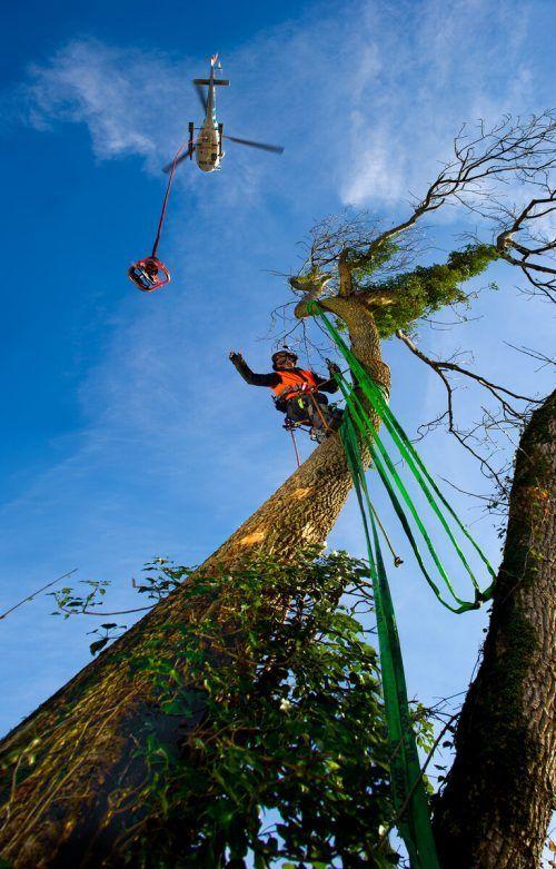 Wucher-Mitarbeiter durchlaufen im Bereich Holz eine spezielle Ausbildung. VN