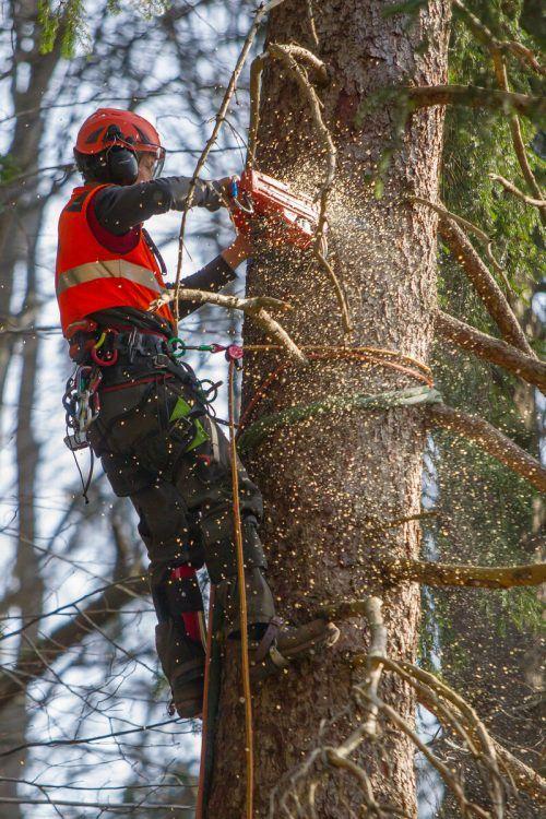 1500 Österreicher verletzen sich jährlich bei Waldarbeiten. SYMBOL VN/HB