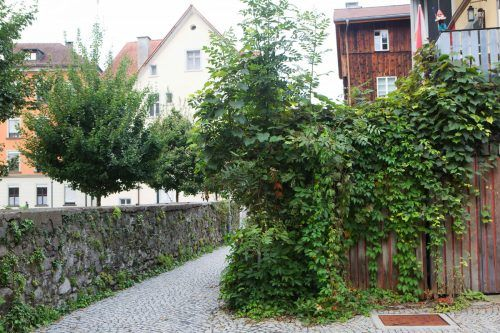 Conrad Amber spricht über die Zukunfsfähigkeit von Bäumen im urbanen Raum.Amber