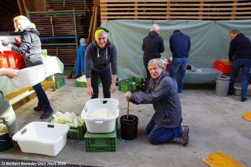 Der Obst- und Gartenbauverein Hard lässt die alte Tradition des Kraut einhoblen und Sauerkrautherstellens wieder aufleben.OGV Hard