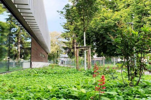Die Außenanlagen des neuen Kindergartens St. Gebhard bestechen durch viel Grün und eine Blumenvielfalt.