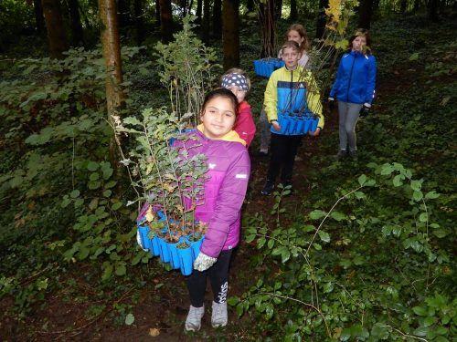 Die Mittelschüler pflanzten zahlreiche Weißtannen.cth