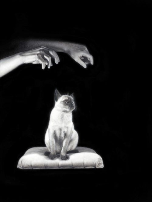 """Drago Persic ab 15. Oktober in Hard: """"Mysterious Pair of Hands HYPNOTIZE a Siamese CAT""""."""