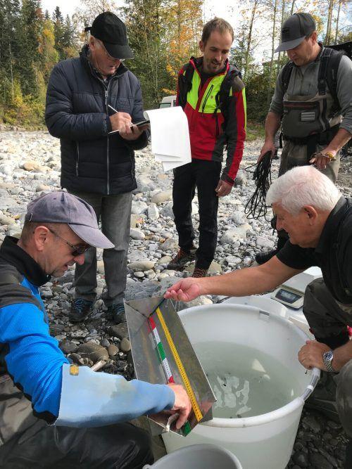 Fischereiexperten informierten über die Fischbesiedelung der Bregenzerach.