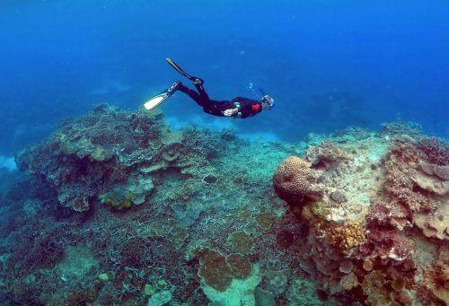 Forscher haben ein riesiges Korallenriff im Great Barrier Reef entdeckt. reuters