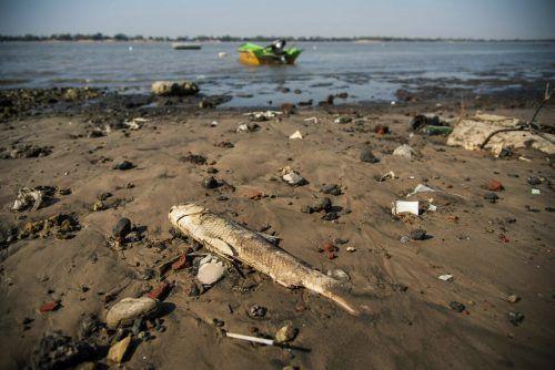 Hunderte tote Meerestiere wurden vor Kamtschatka angespült. symbolfoto afp