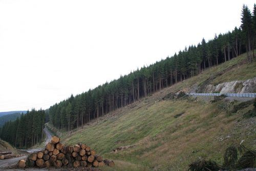In der EU werden Forschern zufolge immer mehr Waldflächen gerodet.
