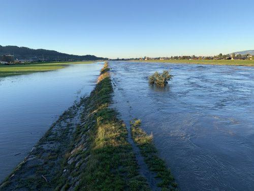 Nach fünf Wochen ist der Rhein erneut übergelaufen.