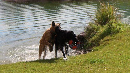 Nasser Spaß für Vierbeiner beim Hundebadetag an der Unteren Au.Archiv/HE