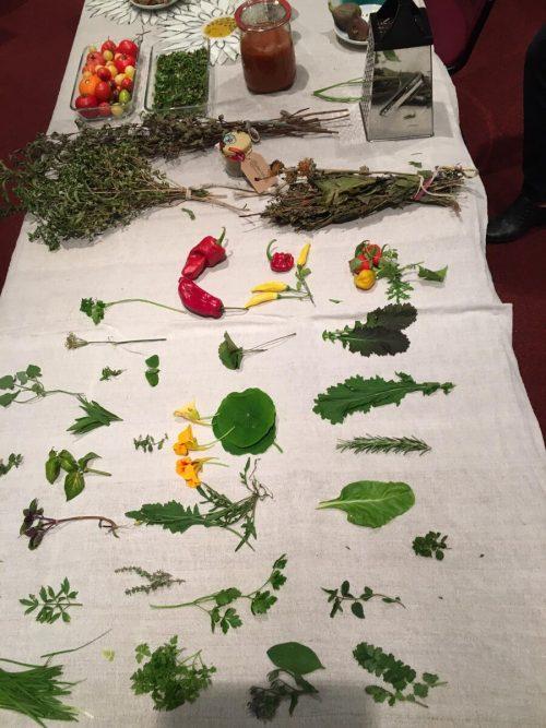 Vieles, was im Garten wächst, lässt sich zu verschiedenen Gerichten kombinieren.cth (2)