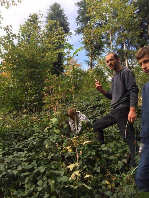 Waldaufseher Rafael Fetz erläuterte das Wachstum der heimischen Bäume. me