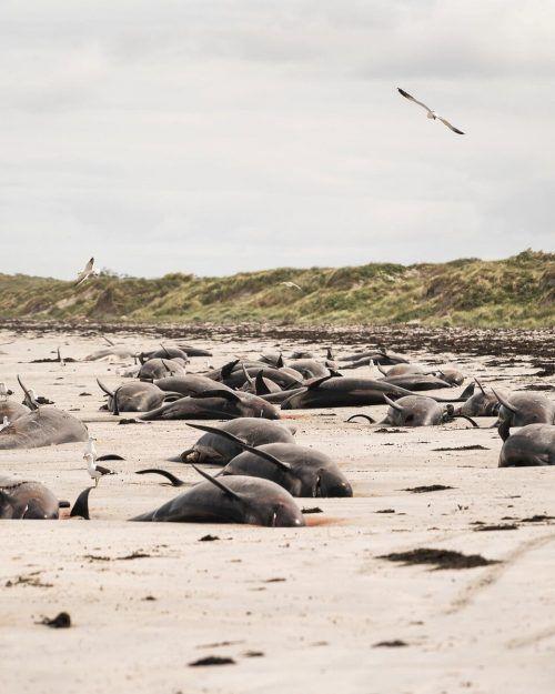 69 Tiere seien bereits tot gewesen, als Helfer die abgelegene Region erreicht haben.