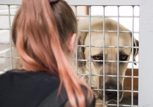 Den Österreichern liegen besonders die Tiere am Herzen. Bei 33 Prozent liegt dieser Spendenzweck an erster Stelle.APA