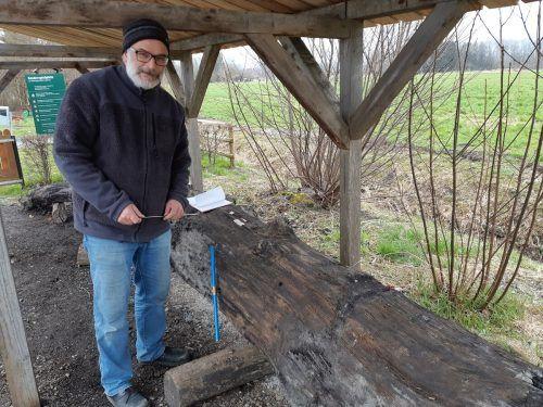 Dendrochronologe Dr. Klaus Pfeifer untersucht die Eiche und entnimmt Jahrringproben.Gemeinde