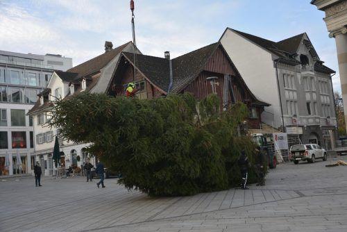 Der Christbaum für den Dornbirner Marktplatz wird angeliefert.