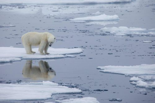 Der Klimawandel bedroht die Lebensgrundlage der Tiere. AFP