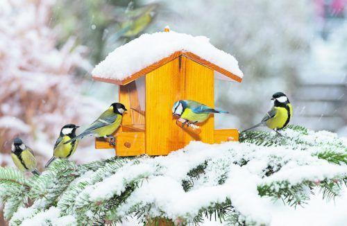 Der Standort eines Vogelfutterhäuschens ist ausschlaggebend.iStock