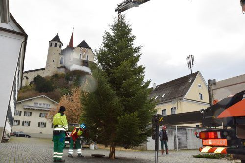Die Bauhofmitarbeiter beim Aufstellen des Tannenbaums auf dem Marktplatz. Am kommenden Freitag werden die Bäume in Rankweil illuminiert. Marktgemeinde