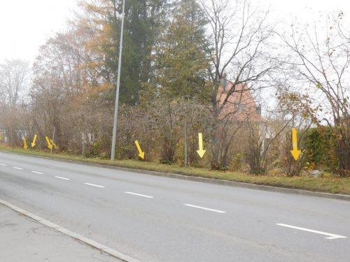 Die gelben Pfeile machen auf die Müllsünden aufmerksam. Mäser